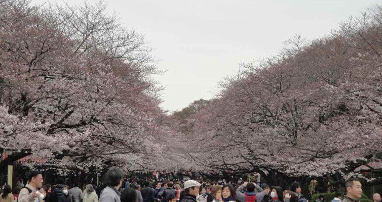 2011年4月上野公園(花見)